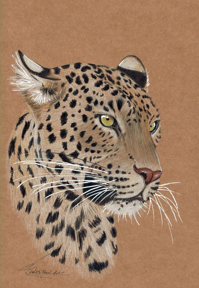Leopard- Februar 2020- A5