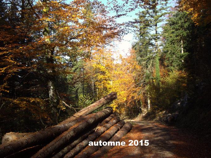 Automne 2015