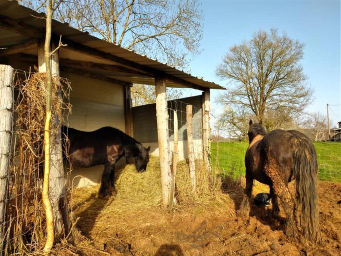 Bouno et Ophélie, isolées dans une petit enclos le temps de guérir