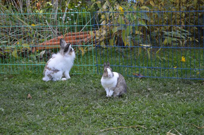 Kaninchen im Freigehege