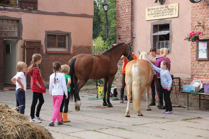 Die Ponys beim Putzen