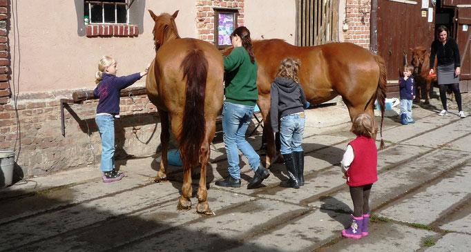 Beim Pferde putzen