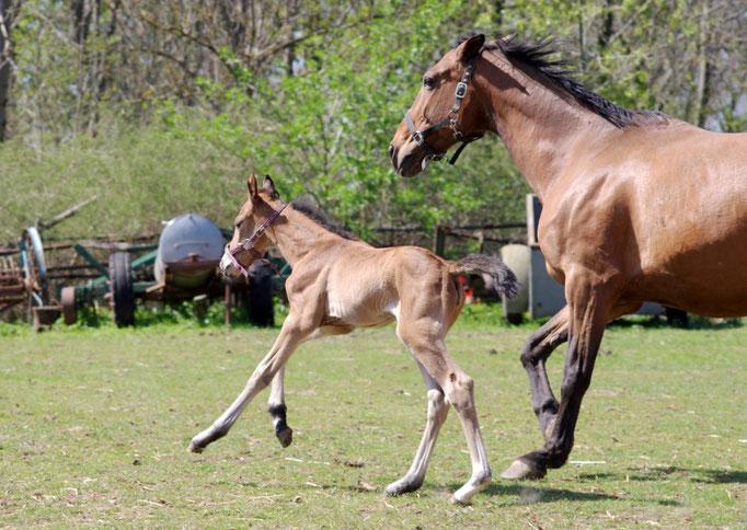 Fohlen Samira und Mama Cinderella