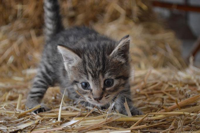 Katzenbaby Mini