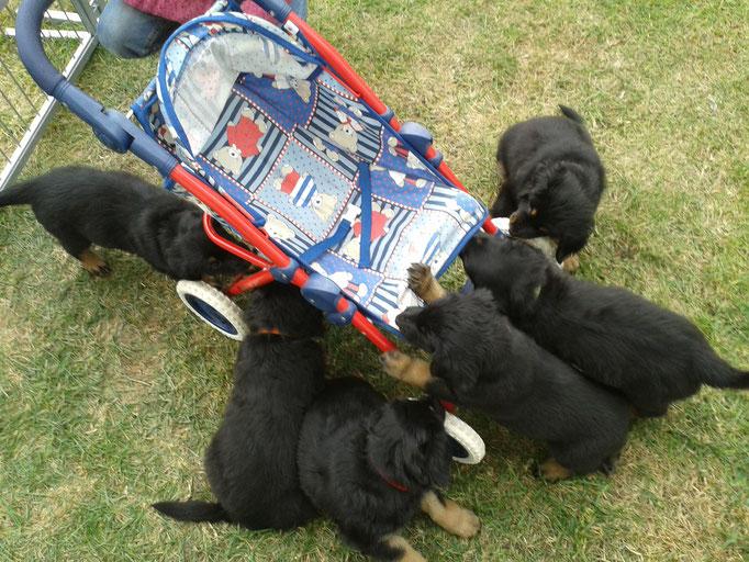 Der Puppenwagen wird von allen erkundet.