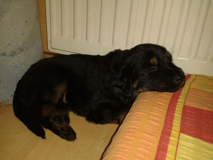 Schlafen im Wohnzimmer