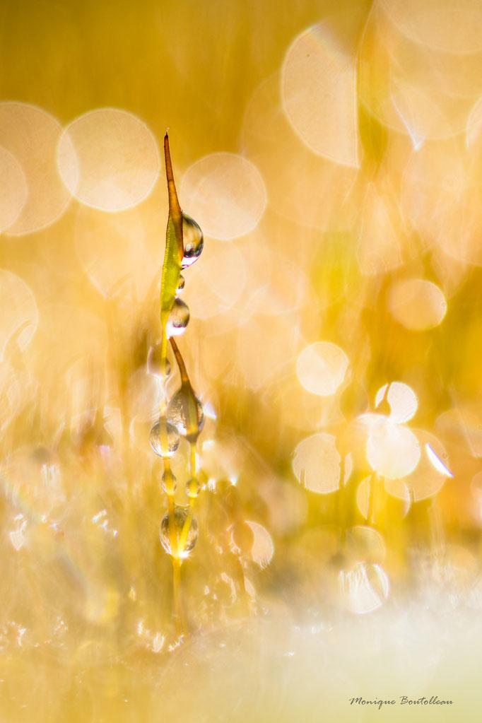 Cascade de verre