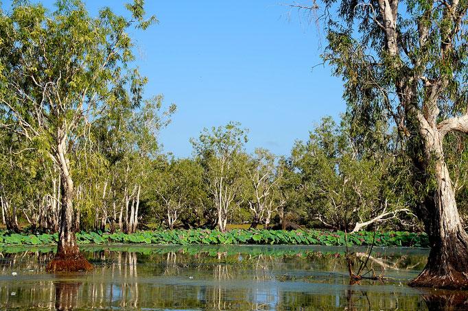 Faszinierende Wasserlandschaft im Kakadu Nationalpark, fotografiert auf einer Airboat Safari.