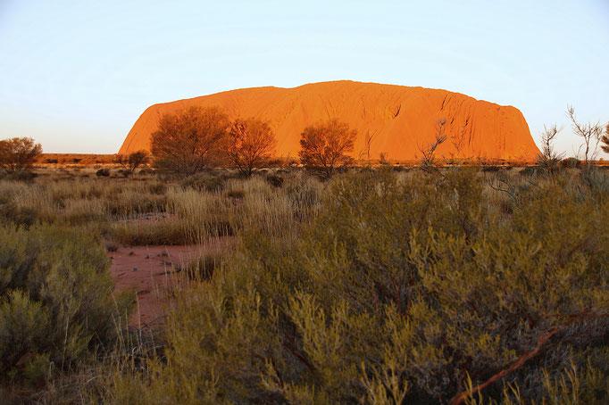 Der heilige Uluru, das Wahrzeichen Australiens im roten Zentrum.