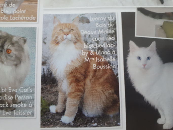 Magazine Matou Chat juin-juillet 2017