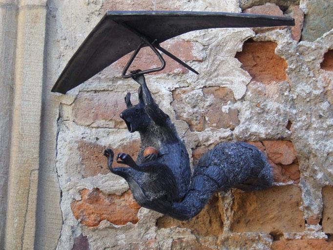 fliegendes Eichhörnchen