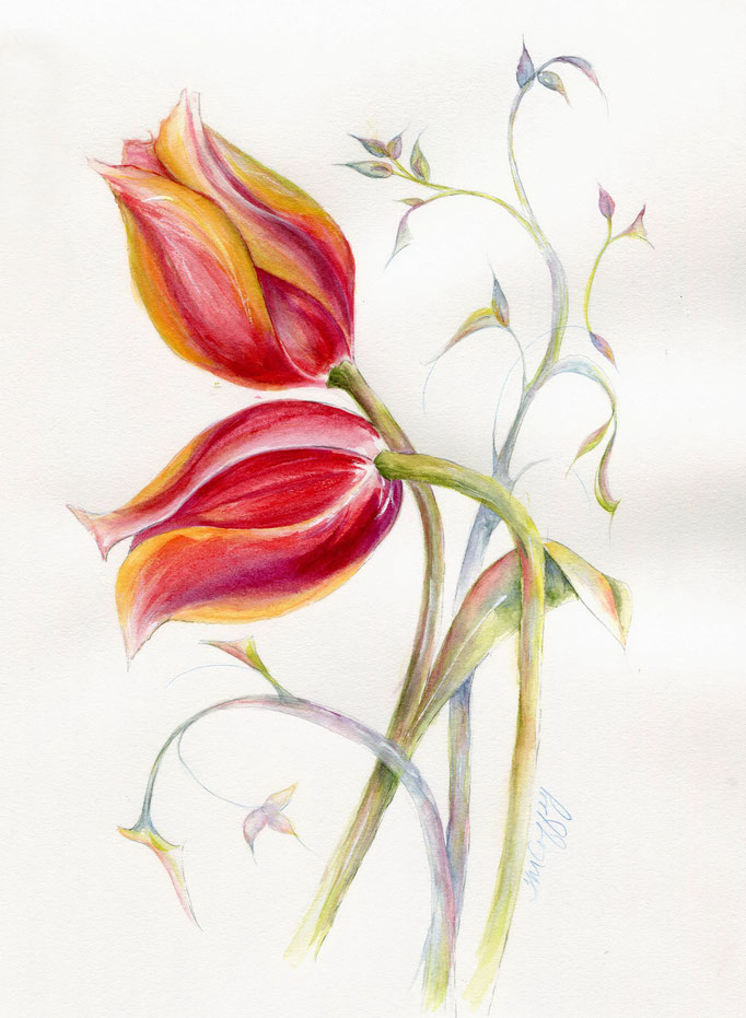 Red Tulips  watercolor 8 x 12  $165