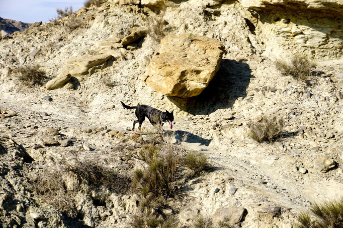 Nochmal zurück in der Desierto de Tabernas