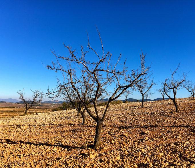 und Biken im Hinterland durch Oliven und Mandelbaum Plantagen