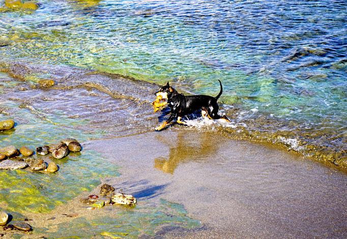 und ne Runde schwimmen gehen (nur die Hunde)