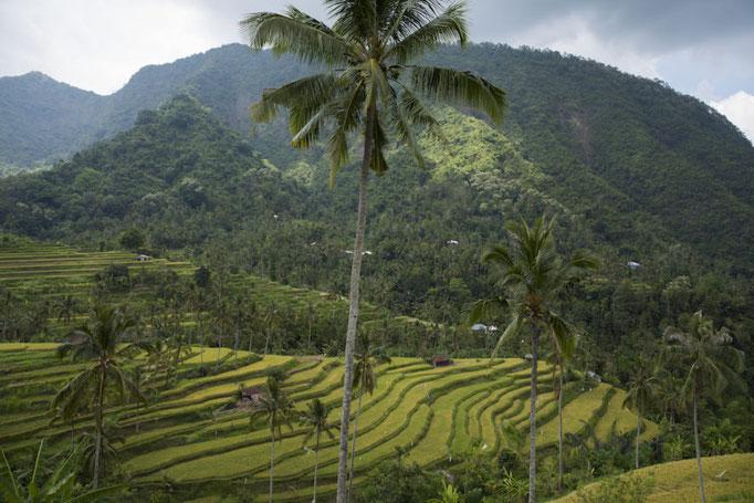 Idyliische Landschaft im Hochgebirgs-Dschungel: Lemukih