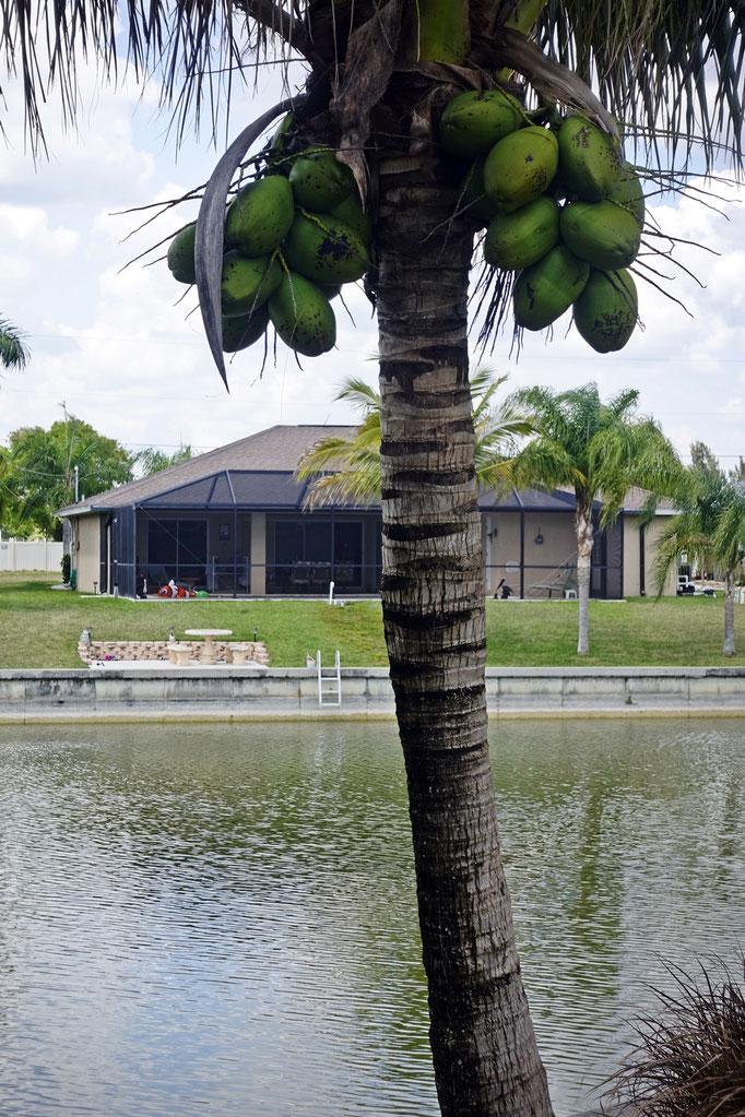 Villa Tropical Breeze - Kanalseite