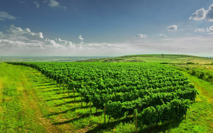 Weingut: Vitis Metamorfosis, Rumänien