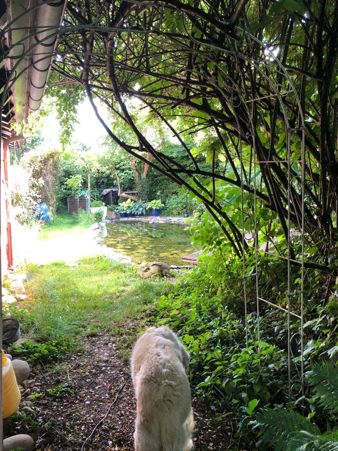 Der Eintritt in den Garten ist rosenumrankt-