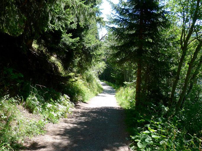 Sentier autour du lac de St-Guérin
