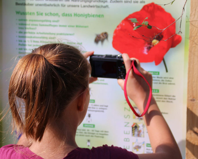 Bienenlehrpfad auf dem Natur und Imkerhof Zingst