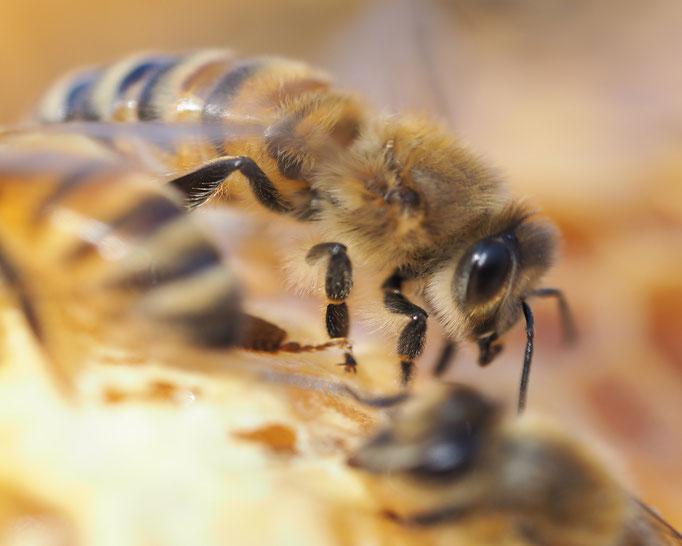 Bienenlehrpfad Zingst Ausflugsziel