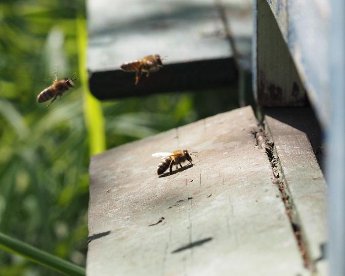 Natur und Imkerhof Bienenlehrpfad Ausflugsziel Zingst