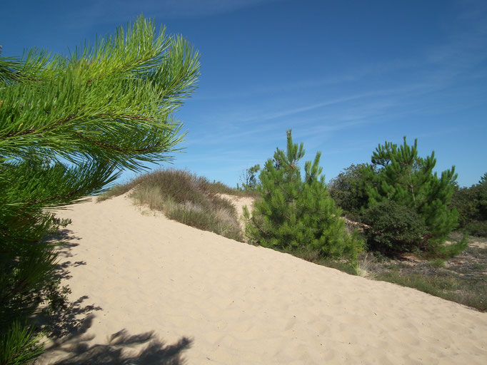Ile d'Oléron - Dunes