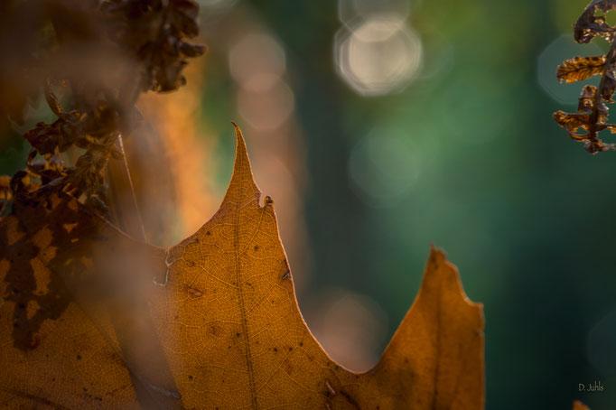Herbstimpression, Kührstedt