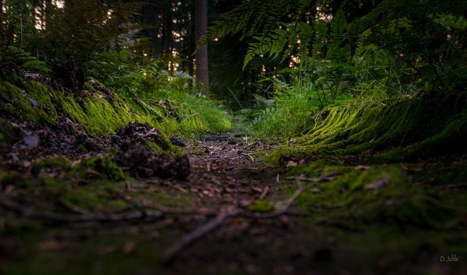 Treckerspur im Wald, Friedwald Kührstedt