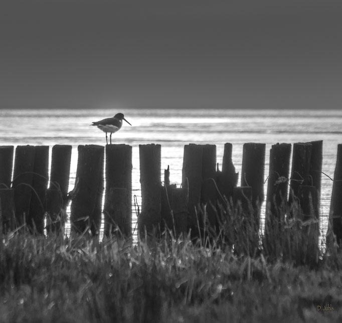 Nordsee, Wremen