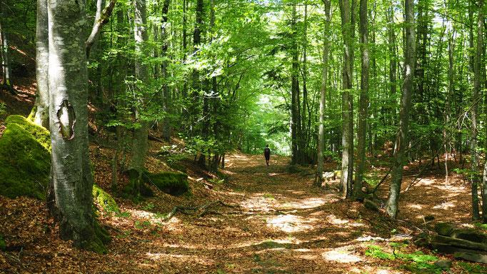 Randonnée vers la cabane de Pierre Baudinard depuis le Mas ; Saint-Disdier ; Dévoluy. Voyage Max de Nature
