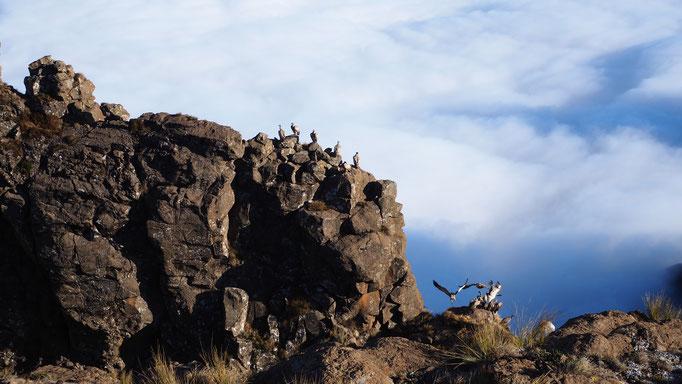 Sur le plateau entre Rockeries et Mnweni pass ; Drakensberg ; Afrique du Sud. Voyage Max de nature