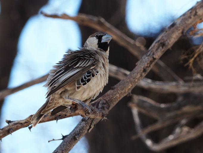 Habiter en oiseau ; Républicain social. Culture Max de Nature