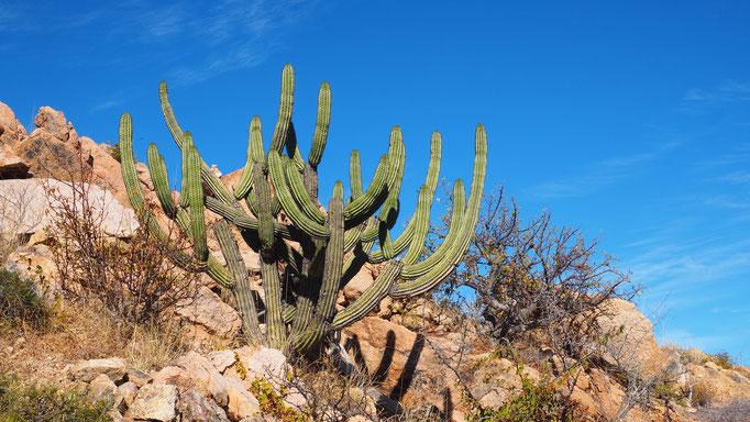Santa Rita hotspring ; Basse-Californie ; Mexique. Voyage Maxime Lelièvre