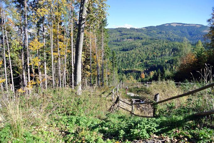 Semmeringgebiet, Bärenkogel