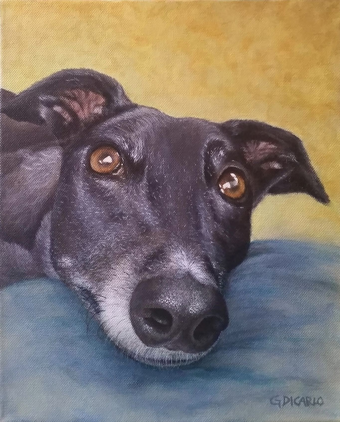 Maisie, greyhound, 30 x 25 cm (12 x 10 in.) canvas