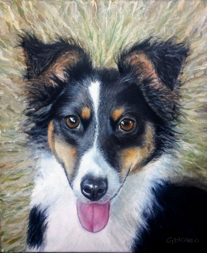 Axel, Australian shepherd, 30 x 25 cm (12 x 10 in.) canvas