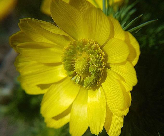 Pflanzenfotografie, plant photography plantfotografy pflanzen fotografie, Blumen fotografieren