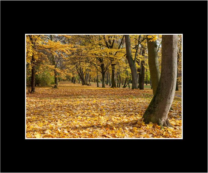 FW111 Herbst im Pfrimmpark (Kurt Jost) [Passepartout auch in weiß möglich]