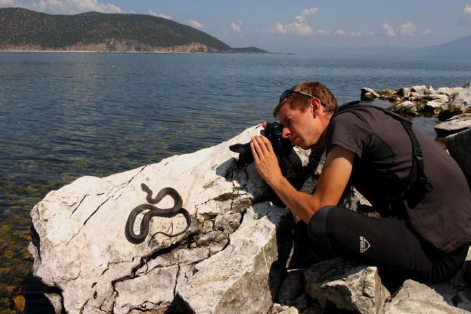 Photographiant une Couleuvre tessellée en Macédoine (photo : Ivan Arsovski)