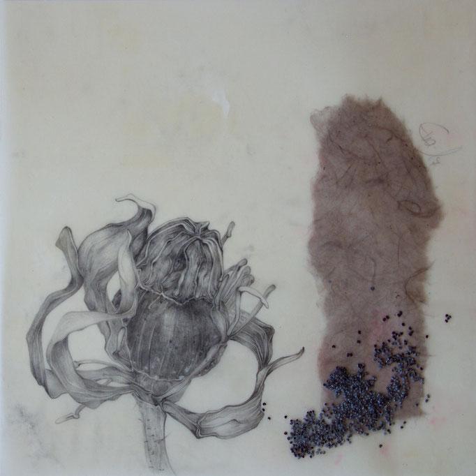 Verblüht-Bleistift,Naturpapier,Mohnsamen,perforiert,gewachst-2017-20cmx20cm
