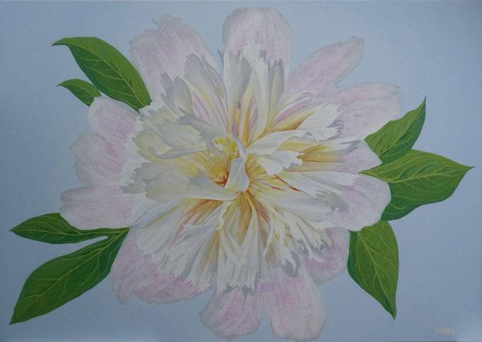 Paeonia rosa -  70 x 100cm  Acrylfarbe, Leinwand, Schlussfirnis  480.00 €