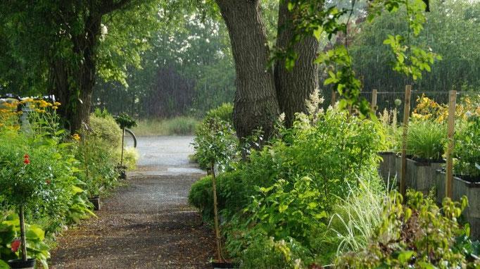 Lang ersehnter Regen