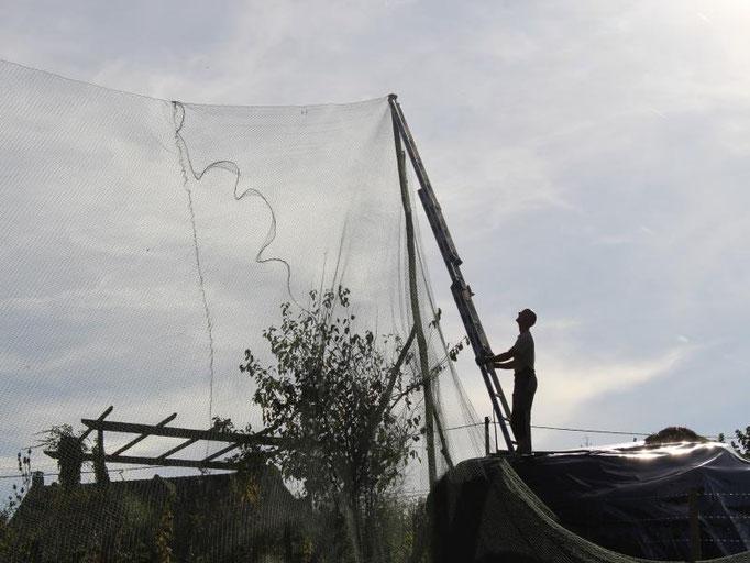 Installation de la volière pour accueillir des paons, faisans, perdrix...