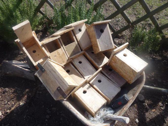 Installation de nichoir dans le domaine en permaculture