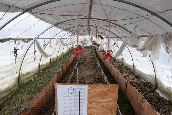 Pensez à balayer les bâches de vos serres sous le poids de la neige ! Ail sous serre en attendant d'accueillir salades et tomates à partir d'avril