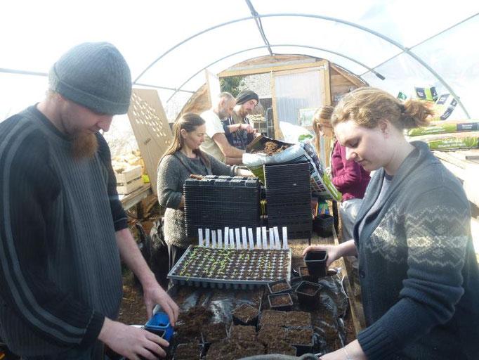 Atelier rempotage des semis de tomates