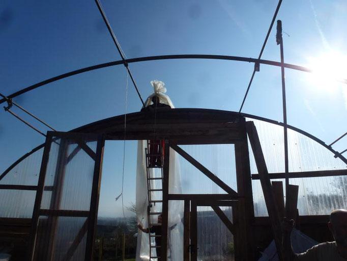 Installation de la bâche sur la serre