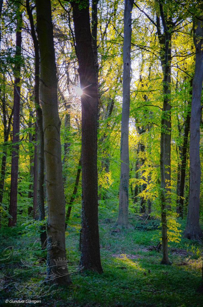 Klinter Wald